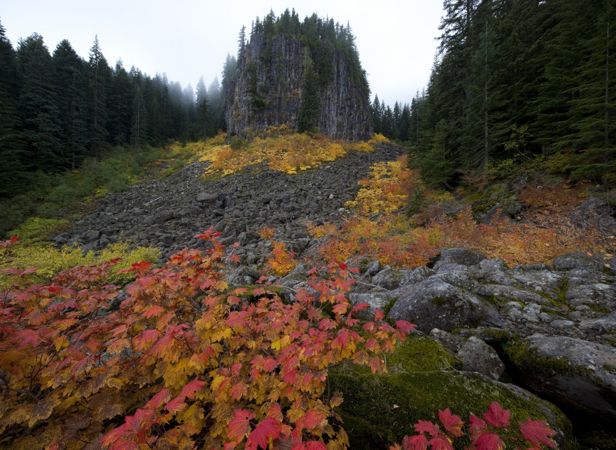 Orange, green and yellow plants grow in a rocky clearing at the base of a massive square shaped rock formation.