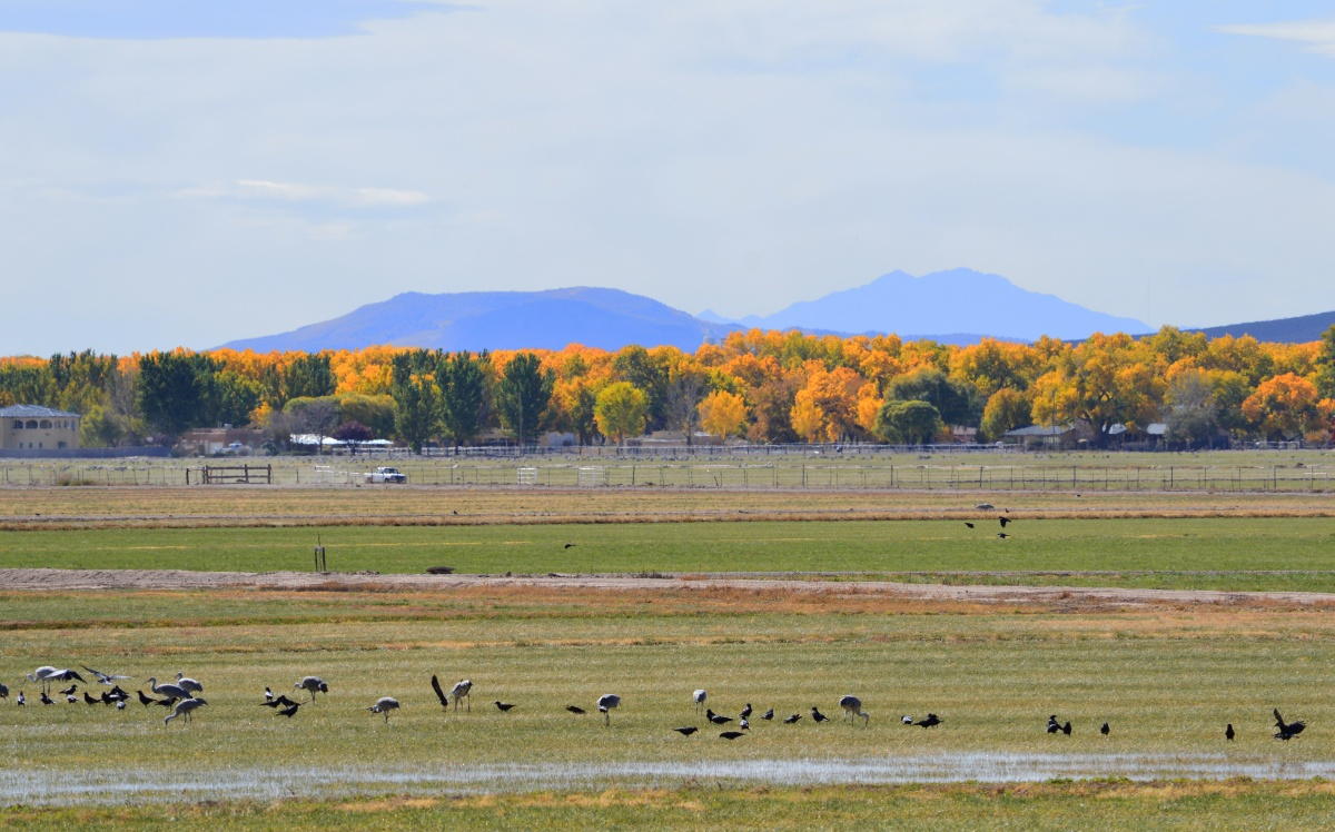 mountains and field of birds