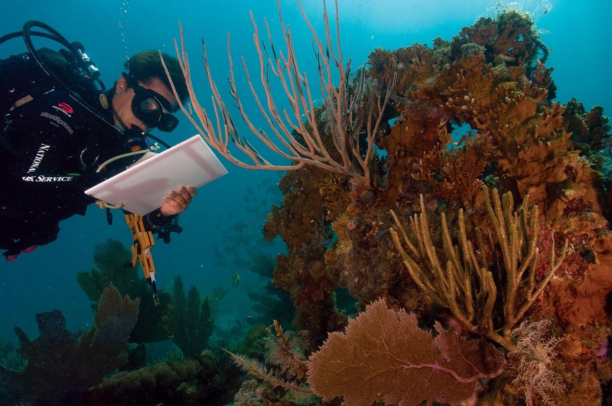 scuba diver checking coral