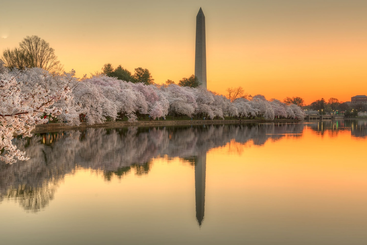 Cherry blossoms ring the water with a towering structure in the background.
