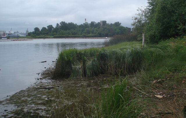 Herring's House habitat restoration site near the mouth of Lower Duwamish River, King County, Washington